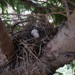 Our nest check found a bird's nest.